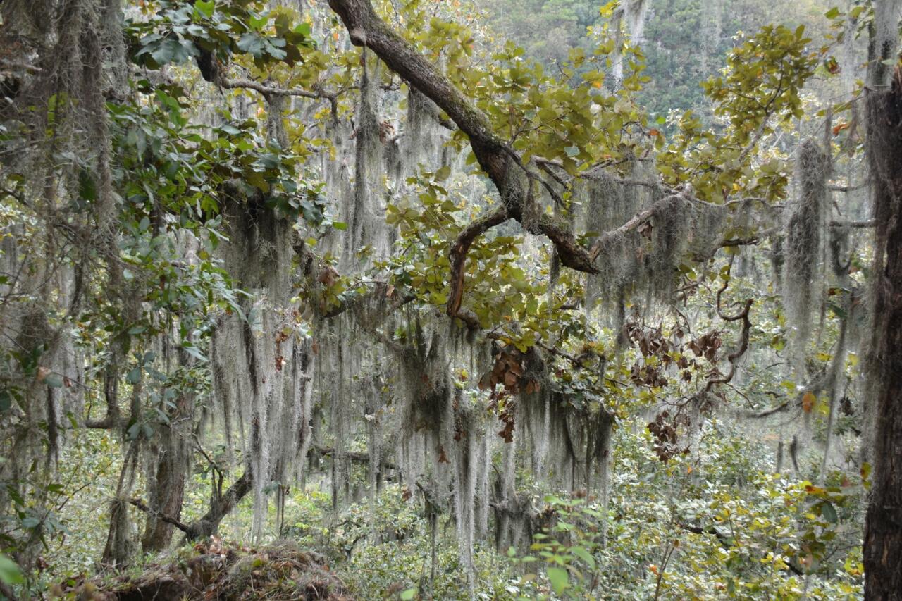 mosses in trees hiken Apante Matagalpa Nicaragua