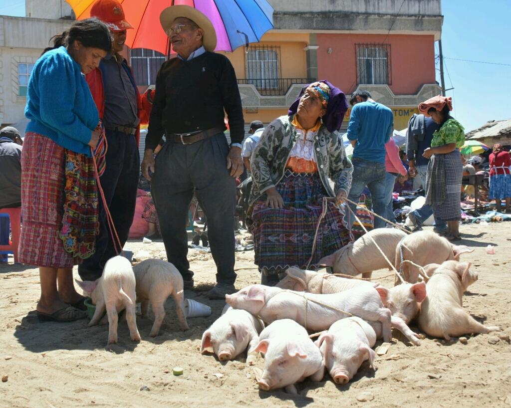 Veemarkt San Francisco de Alto, Guatemala