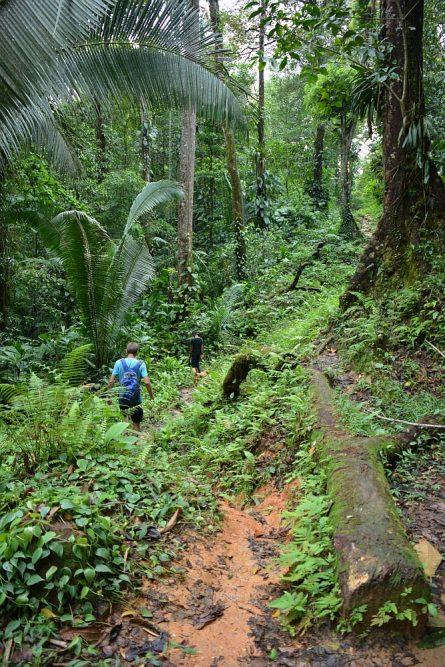 waterval en jungle Rio Lampara Guatemala