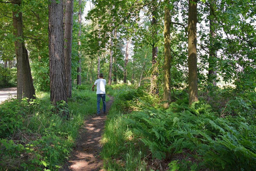 Bos en vennenwandeling bij Goirle bos