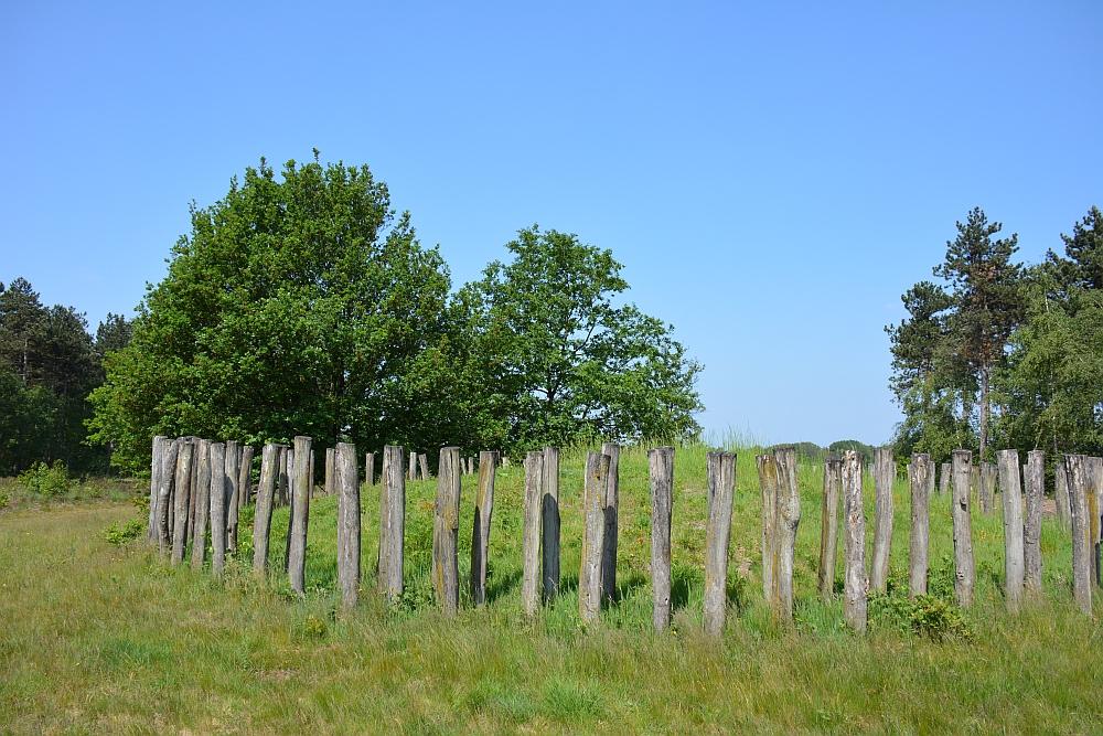 Bos en vennenwandeling bij Goirle grafheuvel Regte Heide
