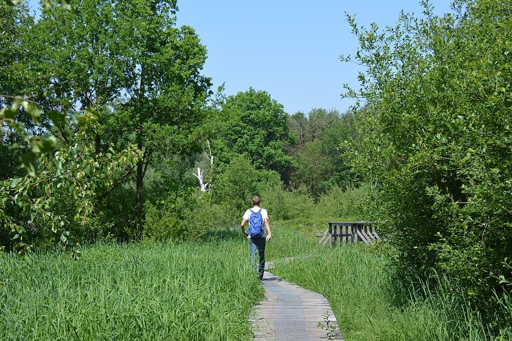 Bos en vennenwandeling bij Goirle landgoed de Hoevens
