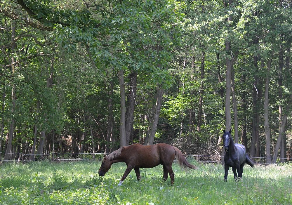 Bos en vennenwandeling bij Goirle paard in wei1