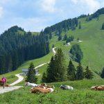 bergwandeling naar Piesenhausener Hochalm en Hochplatte
