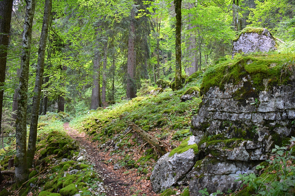 wandelen in de Beierse Alpen Vogelspitz Naturwaldreservat