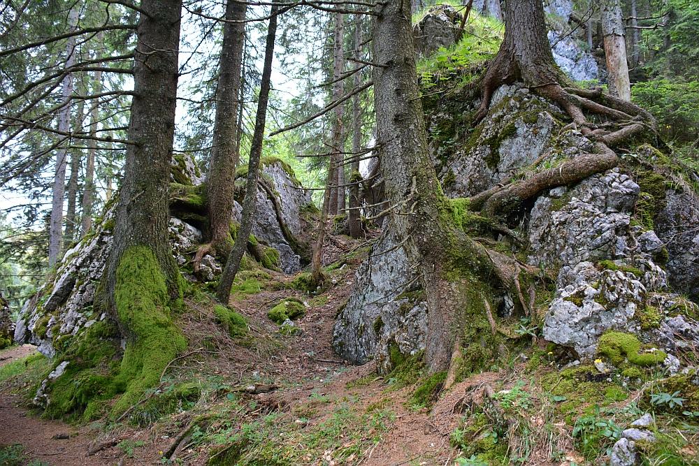 wandelen in de Beierse Alpen Vogelspitz Naturreservat