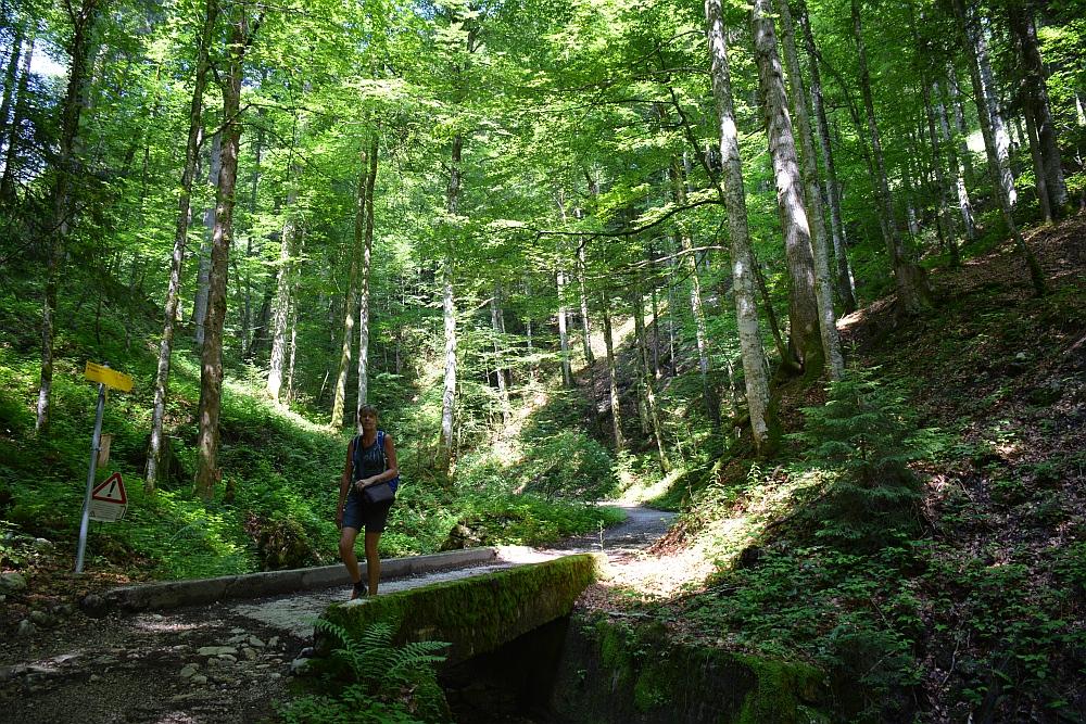 wandelen in de Beierse Alpen terugweg door bos