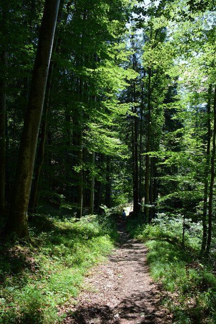 Smokkelaarsroute in de Beierse Alpen afdaling door het bos