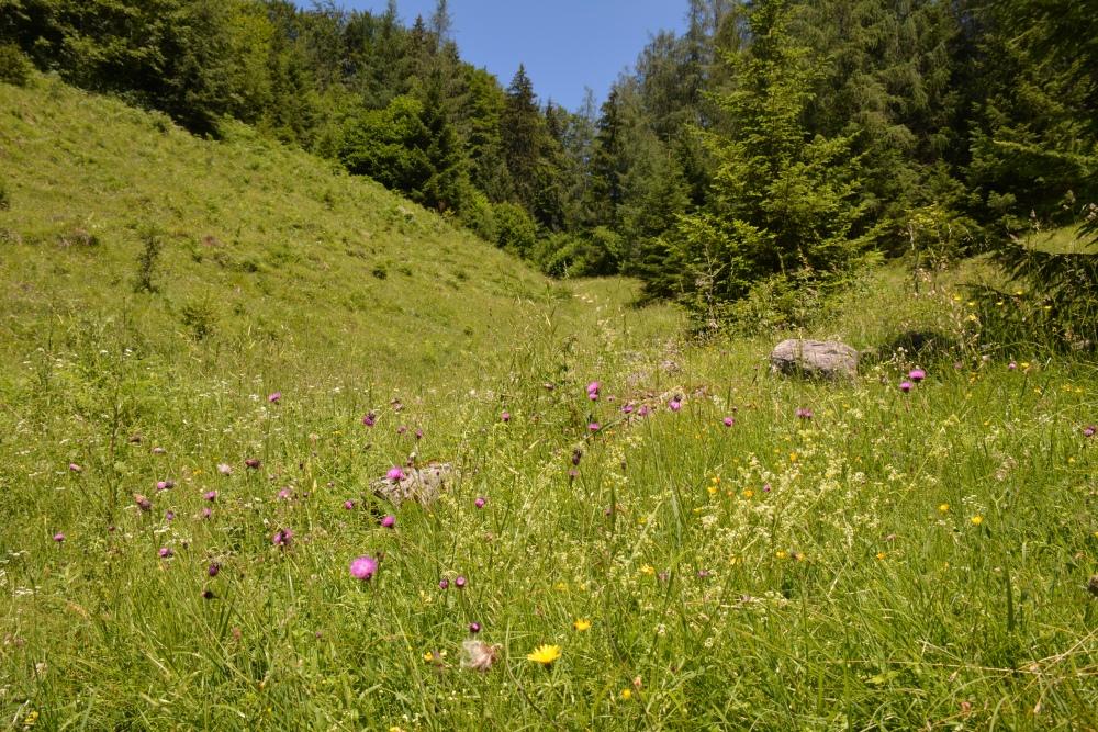 Smokkelaarsroute in de Beierse Alpen alpenwei