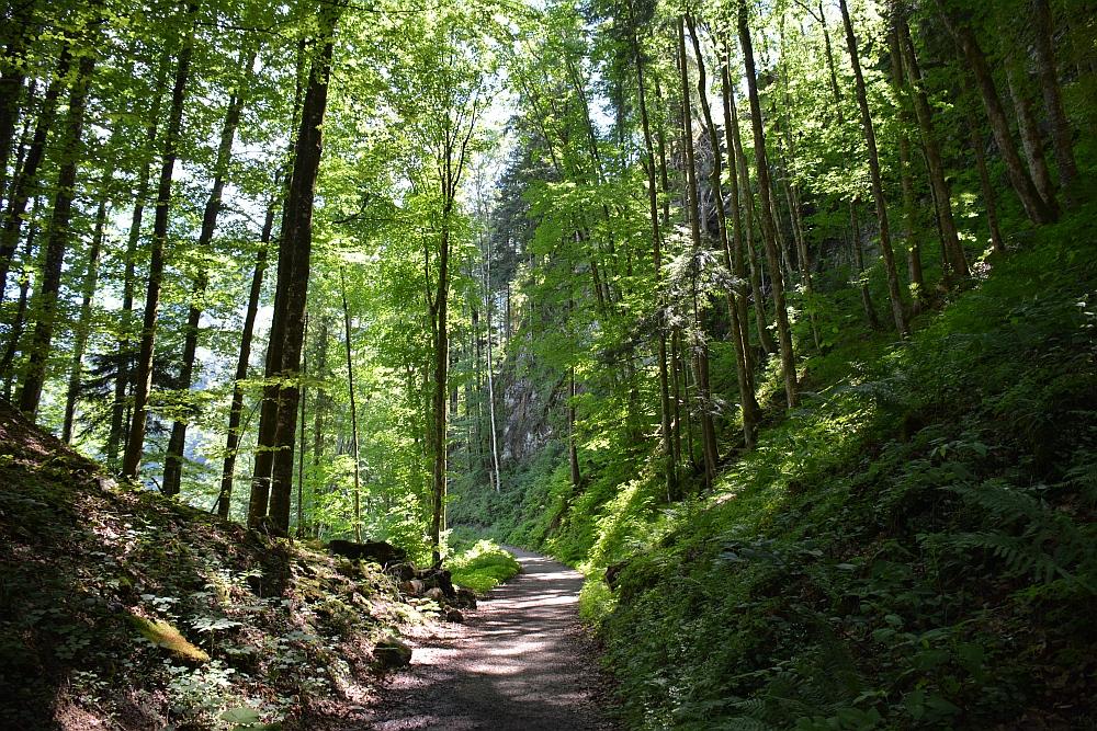 Smokkelaarsroute in de Beierse Alpen bos