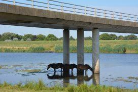 Walk of Wisdom van Grave naar Hernen paarden zoeken verkoeling onder brug