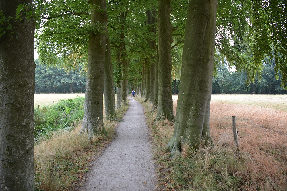 Walk of Wisdom van Hernen naar Winssen beukenlaan