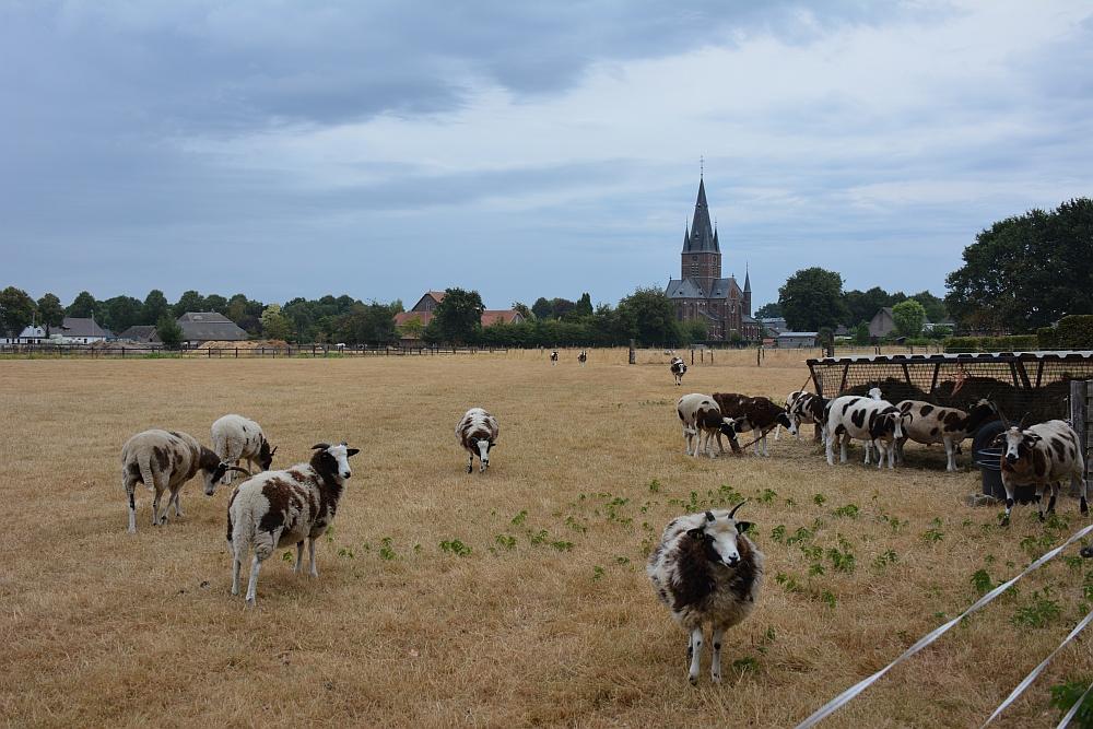 Walk of Wisdom van Hernen naar Winssen geiten in weide