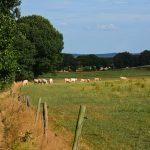 Walk of Wisdom van Nijmegen naar Groesbeek Duivelsberg