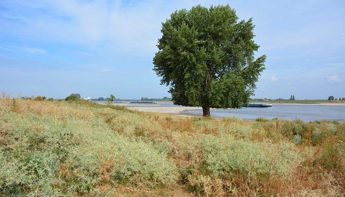 Walk of Wisdom van Winssen naar Nijmegen struinen langs de Waal