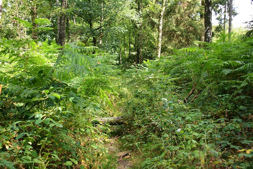 Walk of Wisdom via het Reichswald naar Groesbeek door het Duitse Reichswald struinpad
