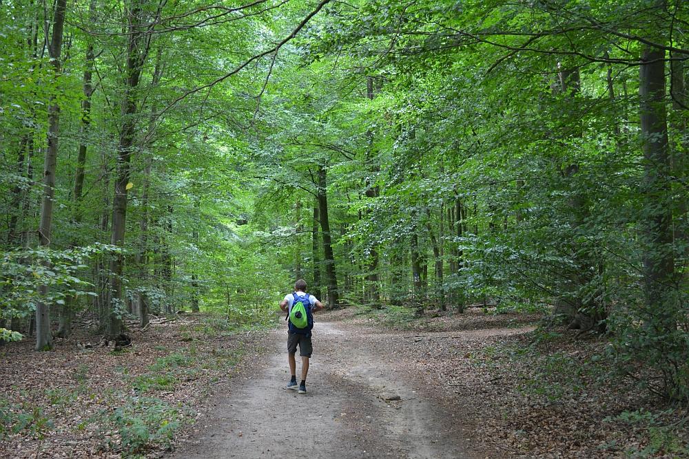 Walk of Wisdom via het Reichswald naar Groesbeek door het Duitse Reichswald