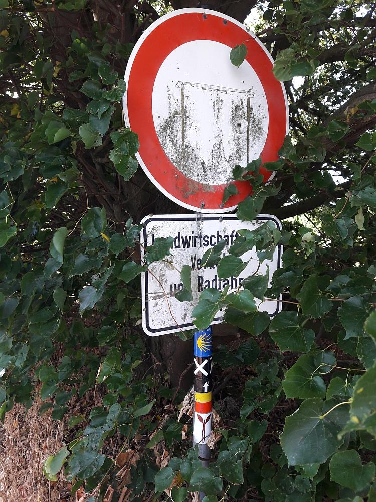 Walk of Wisdom via het Reichswald naar Groesbeek genoeg routes door het Reichswald!