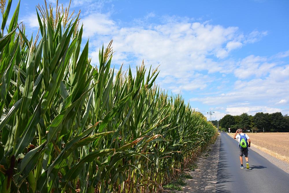 Walk of Wisdom via het Reichswald naar Groesbeek langs de maisvelden