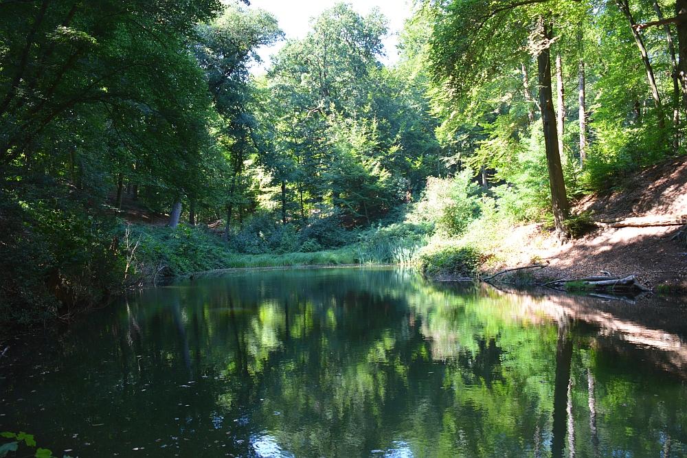 Walk of Wisdom via het Reichswald naar Groesbeek op de Sint Jansberg