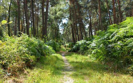 Walk of Wisdom via het Reichswald naar Groesbeek pad met grote varens