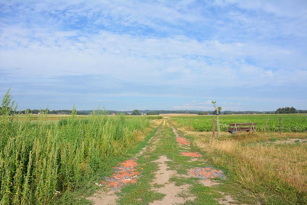 Walk of Wisdom via het Reichswald naar Groesbeek velden bij Groesbeek