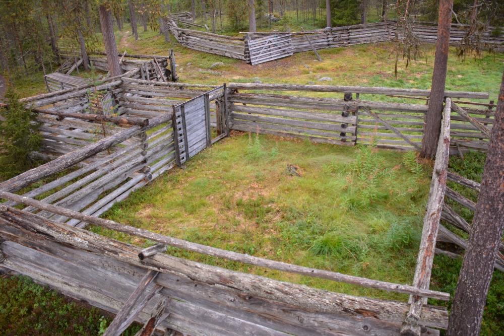 Wandelen in Finland Nationaal Park Oulanka Hidden Hurmos Trail rendier verzamelplek