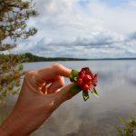 Finland land van 1000 meren