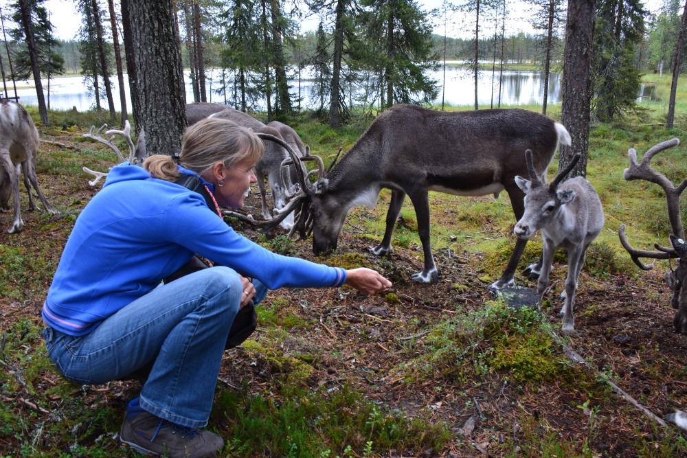 Salla Raindeer Park Lapland