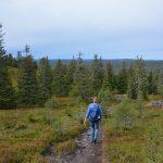 Wandelen in Riisitunturi nationaal park
