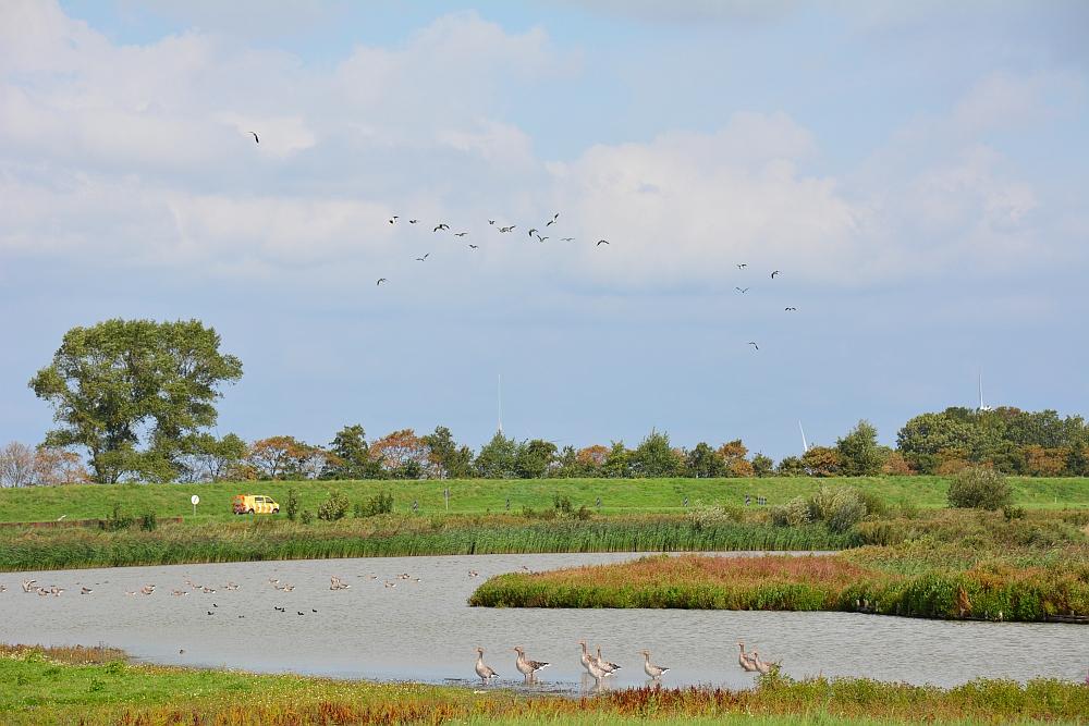 Waterberging Twisk hotspot voor vogelaars