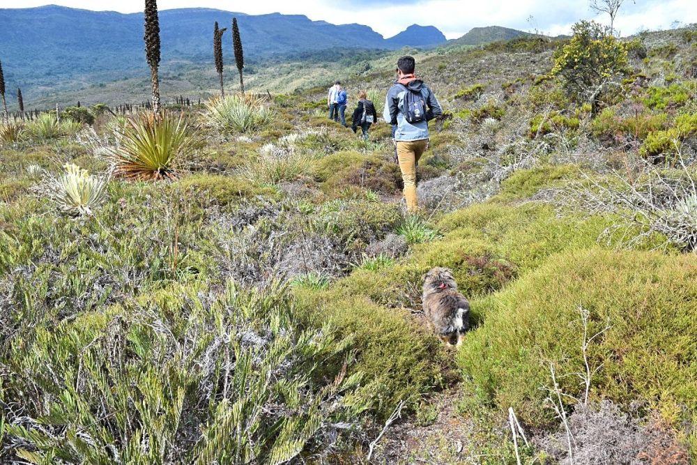 Wonen in Colombia Wandelen door ecosysteem Paramo - buiten de gebaande paden