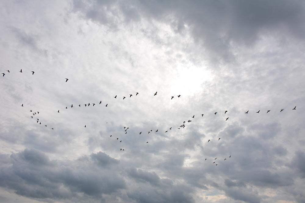 vogels bij waterberging Twisk