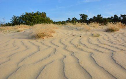 wandelen in de Loonse en Drunense duinen patronen in het stuifzand