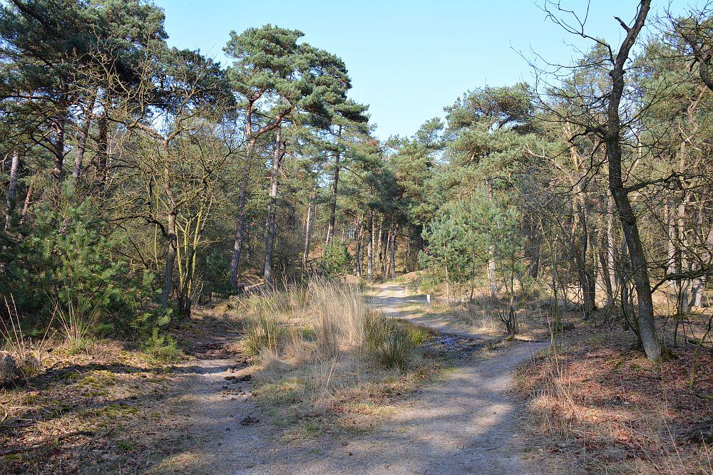 wandelen in de Loonse en Drunense duinen het bosgedeelte