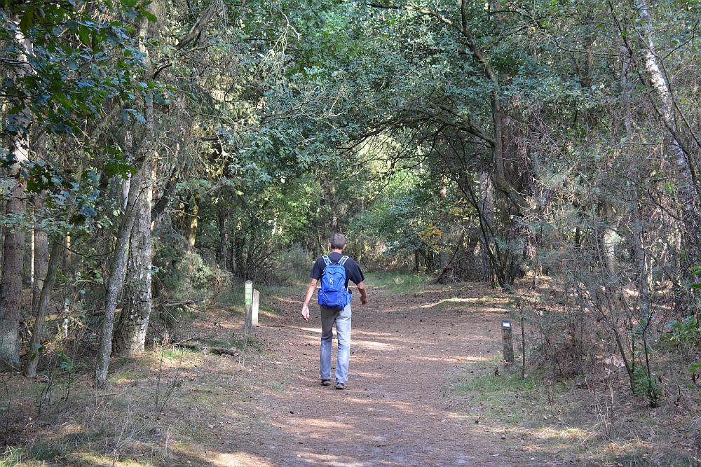 wandelen in de Loonse en Drunense duinen in het bos