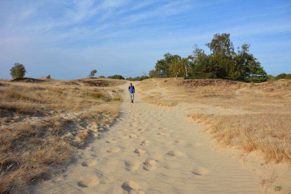 wandelen in de Loonse en Drunense duinen langs knooppunten
