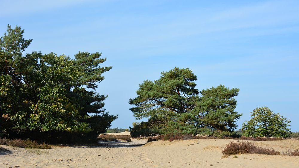 wandelen in de Loonse en Drunense duinen op de rand van het stuifzand