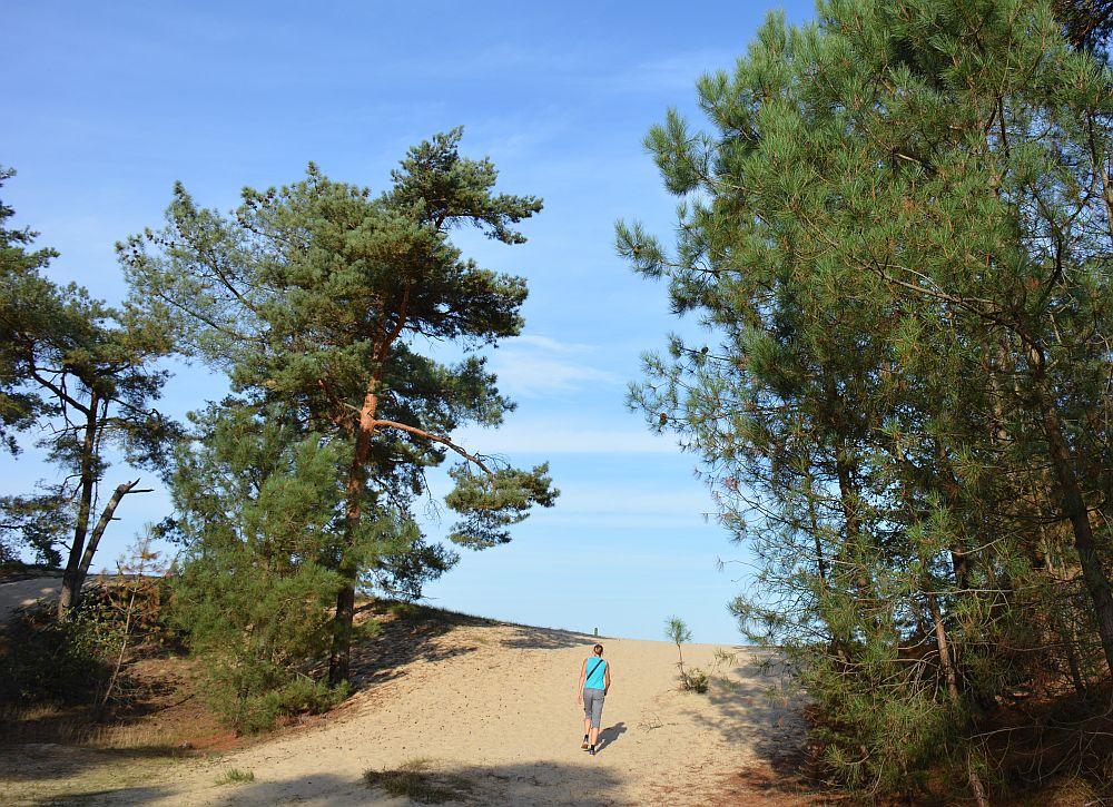 wandelen in de Loonse en Drunense duinen op een zonnige dag
