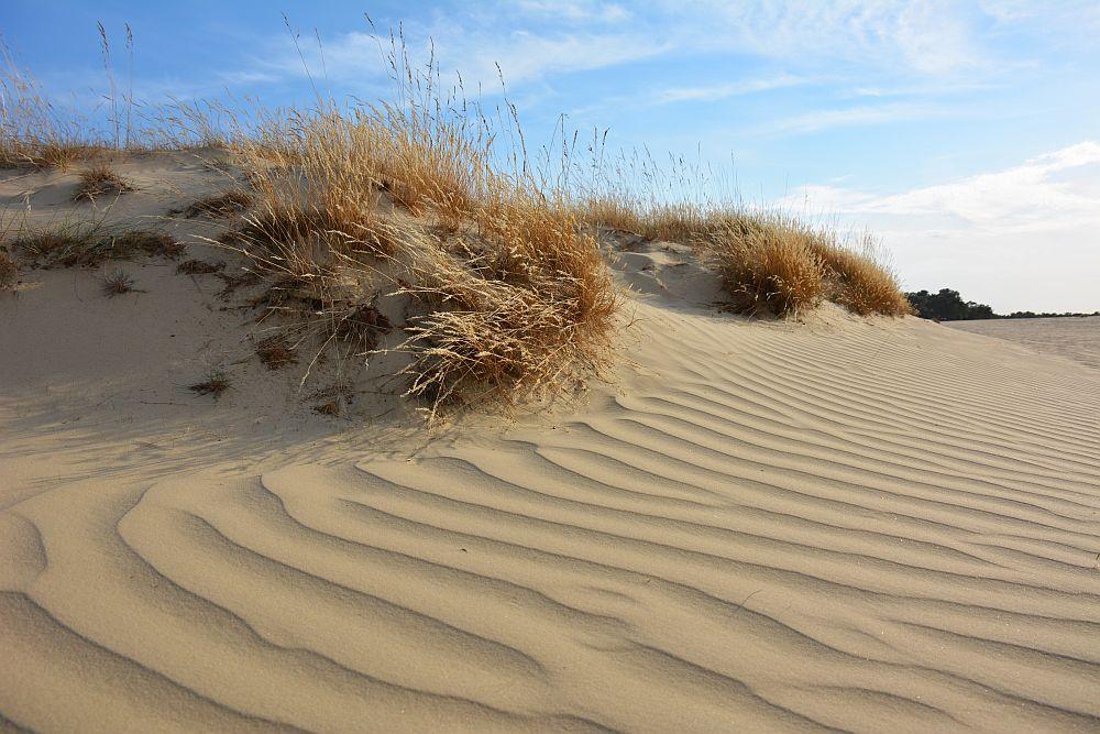 wandelen in de Loonse en Drunense duinen patronen in het zand