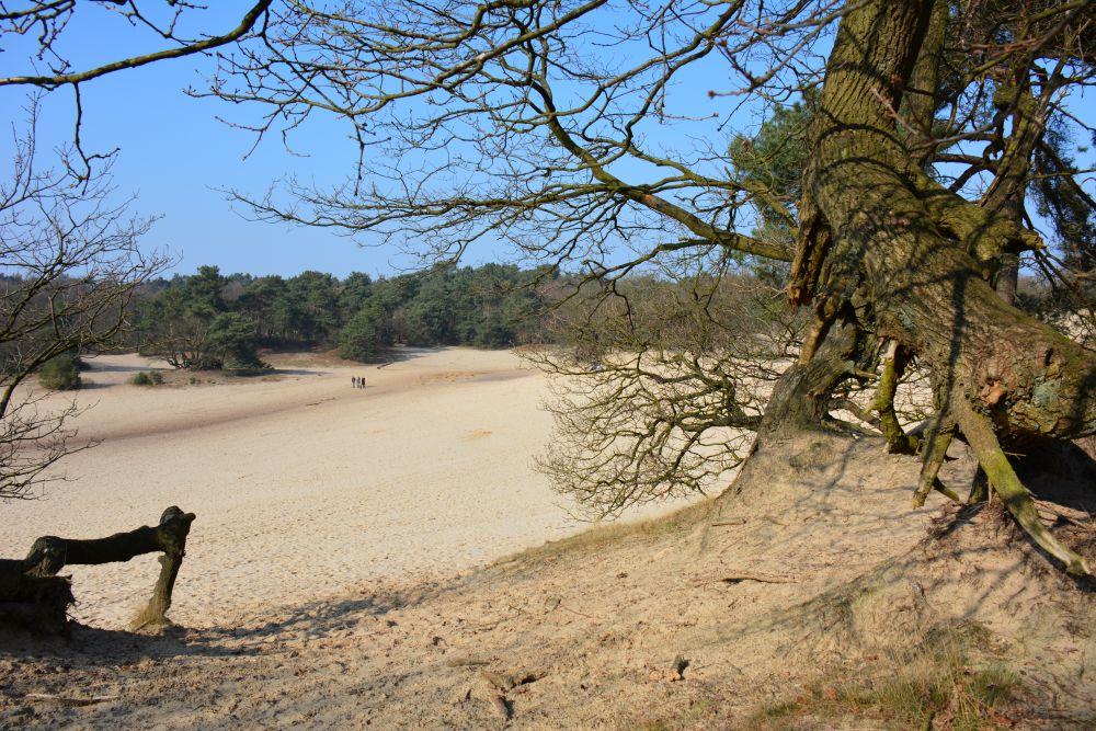 wandelen in de Loonse en Drunense struinen door het stuifzand