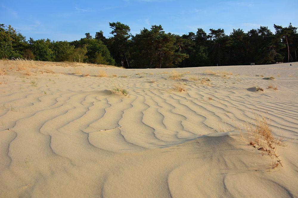 wandelen in de Loonse en Drunense duinen stuifduinen