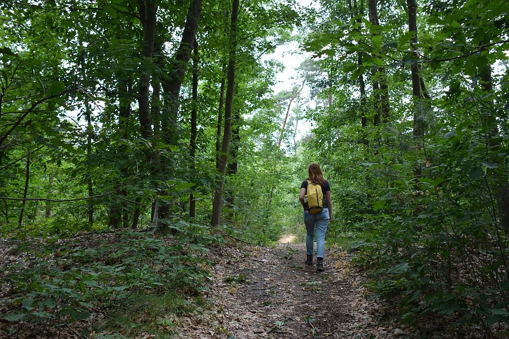 wandelen rond de Peelse heide door het bos bij Reusel