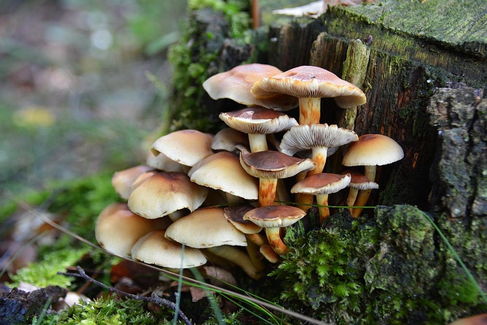 mooiste paddenstoelen
