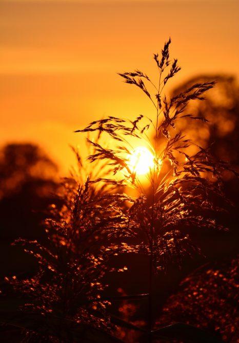 B&B Woonboerderij Dijkerhoek zonsondergang