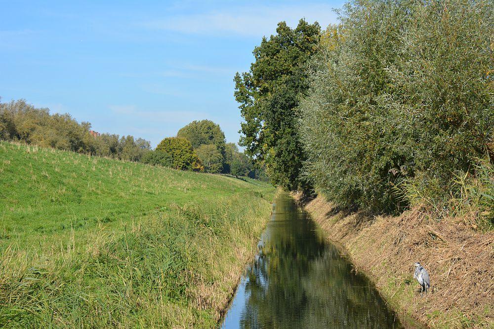 Maas en Vestingroute IJsselmonde reiger