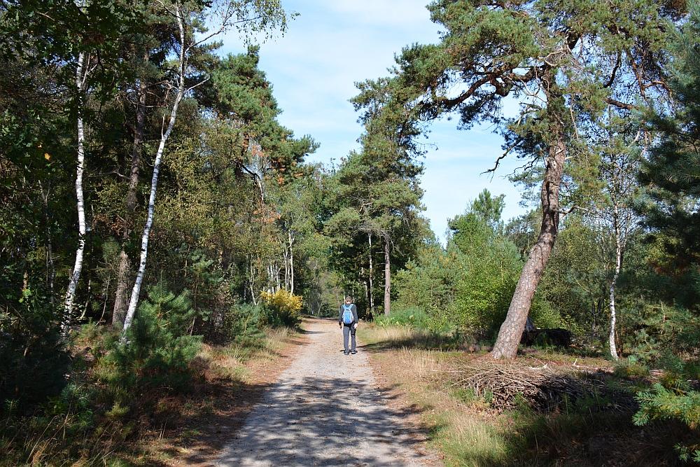 Trage tocht Hilvarenbeek Sallandse Heuvelrug