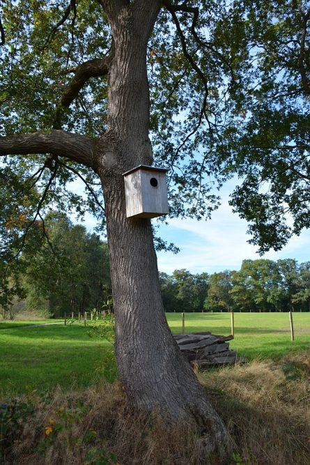 Trage tocht Hilvarenbeek uilenkast in boom