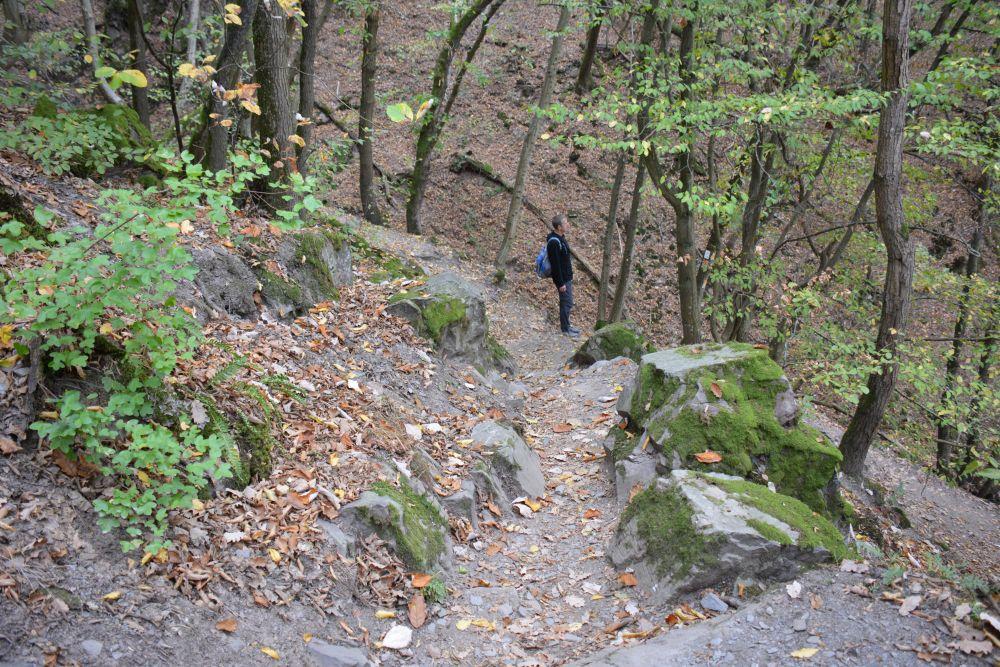 Traumpfad Eltzer Burgpanorama naar Burg Eltz afdaling