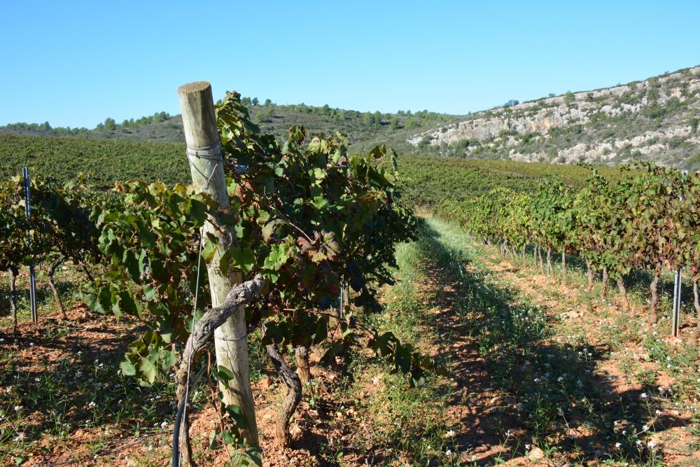 Vakantie in Castellón Ruta del Vino de Castellón